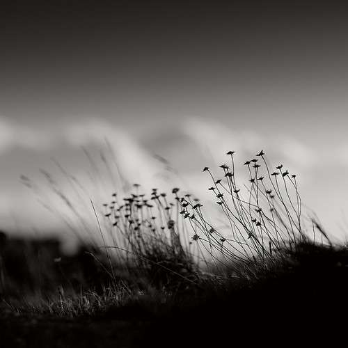 Black Point Grass | by Alexei Krasnikov