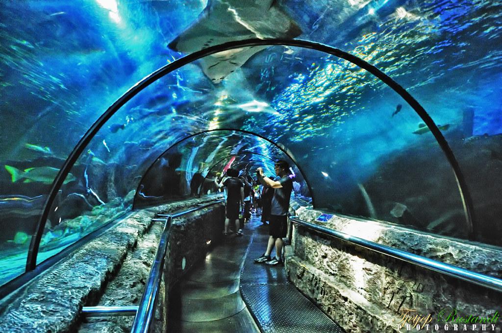 SeaWorld Indonesia tunnel, Jakarta | Taken @SeaWorld