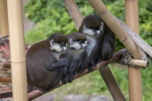 Three's company | by San Diego Zoo Global