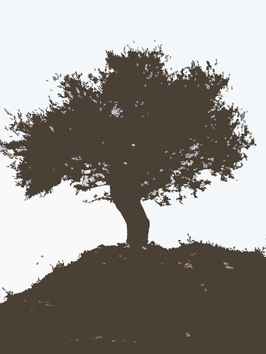 Olive Tree + soil, Silhouette | Flickr - Photo Sharing!