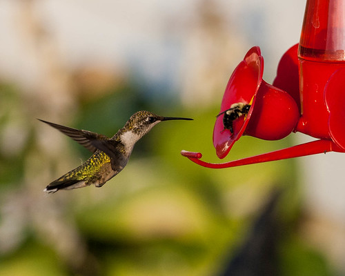 Bird and Bee | by Mike Matney Photography