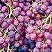 Uvas / Grapes / Trauben