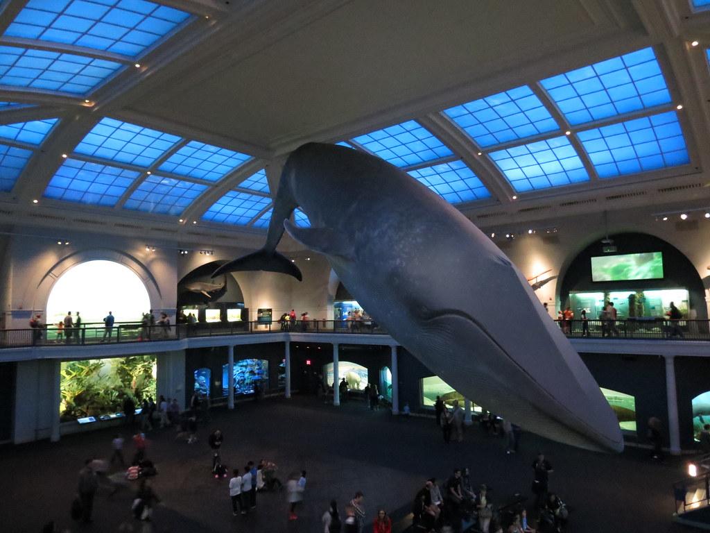 Nyc Natural History Museum Jobs
