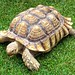 It is my contention that Aesop was writing for the tortoise market. hares have no time to read. Anita Brookner
