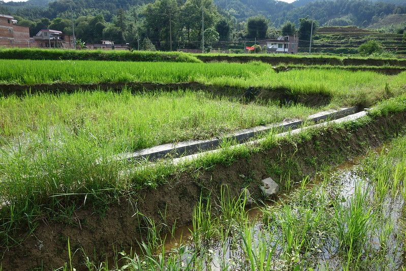 concrete culvert for watering rice paddies