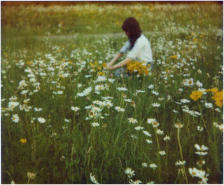 wild daisies of New Hampshire | by the snail and the cyclops