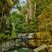 The Moss Garden Carnarvon Gorge