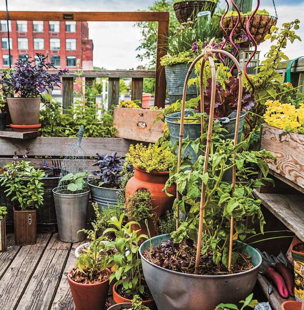 Roof Top Garden Terrace Garden Kitchen Garden Vegetable: Rooftop Container Garden