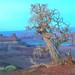 DHP Tree