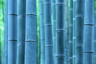 Bamboo forest | by Teruhide Tomori