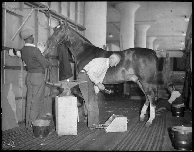 Blacksmith shoes a horse backstage at the Boston Garden for the horse show