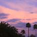 Purple Monsoon Evening