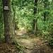 Trespassing Trails