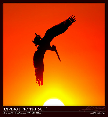 Pelican Diving into the Sun During Sunset | by Captain Kimo