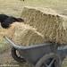 Hay inspectors 2 - FarmgirlFare.com
