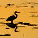 sunrise heron on newnans lake