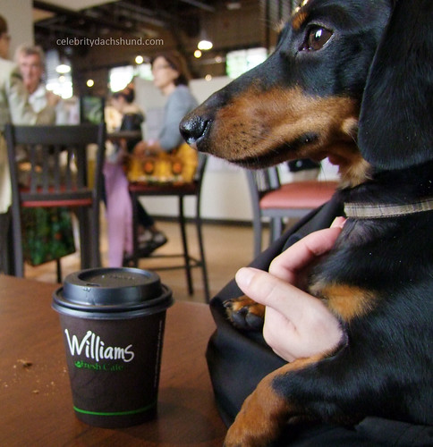 Williams Coffee | by Crusoe the Celebrity Dachshund