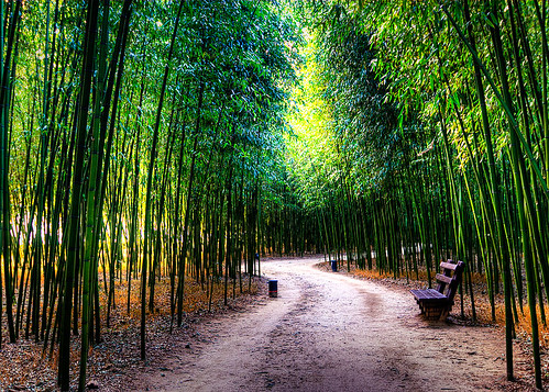 bamboo path | by JTeale