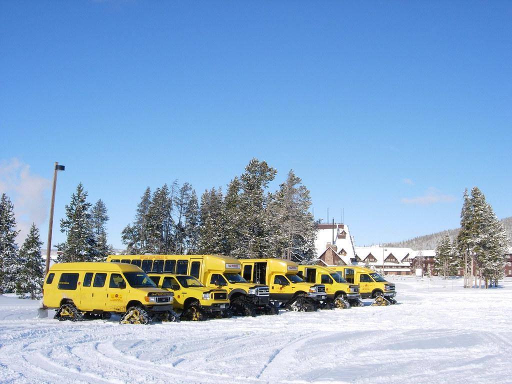 Yellowstone Buffalo Bus Tour