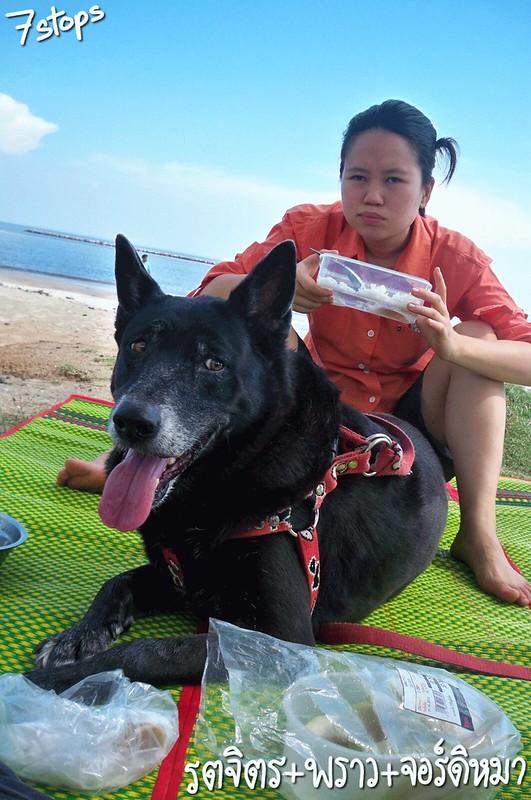 สุนัขเป็นโรคไตวายเฉียบพลัน เพราะตับจะไม่ดีด้วย