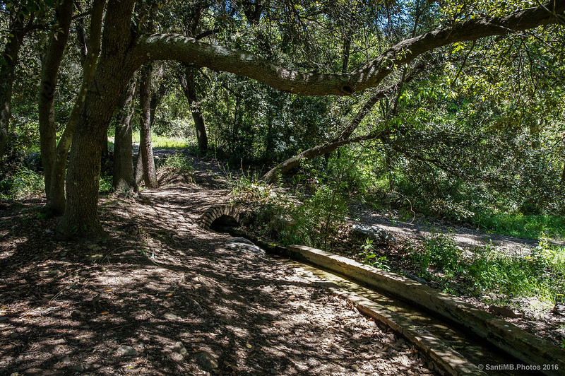 Un viejo canal bajo los árboles