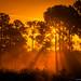 Misty-Morning-Sunrise-at-Pine-Forest-Jupiter-Farms-Florida