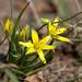 DSC_1796 Wild flowers