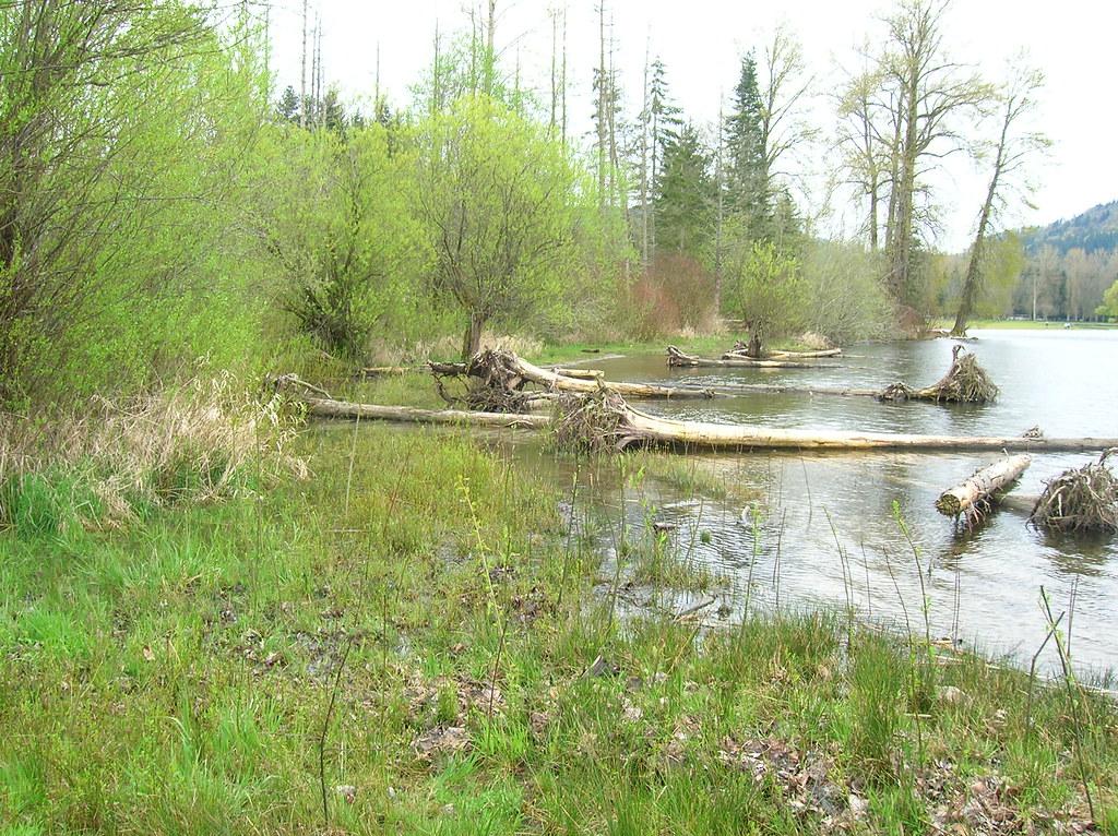 Large woody debris with vegetation lake sammamish sunset for Lake sammamish fishing