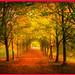 Autumn-Memory