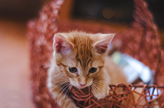 KITTENS | by Andrew Speight // andrewspeight.co