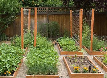 Garden vegetable trellis anne torrence heath ashli for Vegetable garden trellis