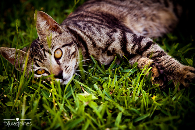 Laying on the grass | Tired after playing ... - photo#34