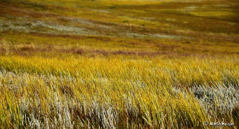 Golden Gate Highland Grasslands | The beautiful grass of ...