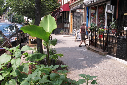 Greenest Block in Brooklyn 2012 | by Brooklyn Botanic Garden