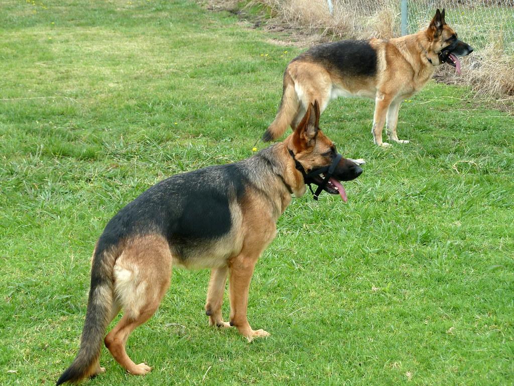 Cranbourne Dog Park