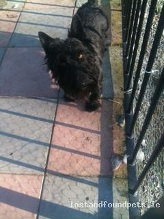 [Manually Removed - Reason Undisclosed] Tue, Jul 10th, 2012 Lost Male Dog - Main Road, Broadford, Kildare | by Lost and Found Pets Ireland