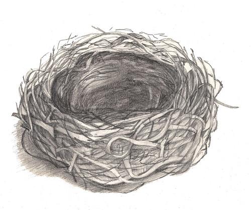 Bird Nest Drawing | Flickr - Photo Sharing!