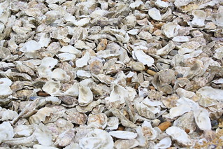 Oyster shell recycling | by Bookmouse