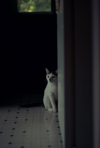 shy kitty. | by gone girl [ negative-nowhere ]