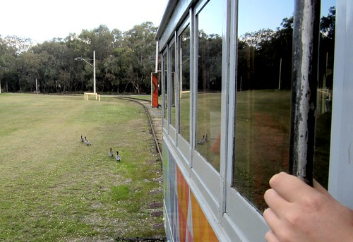 Ducks crossing in front of the tram, Whiteman Park, Perth | by Daniel Bowen
