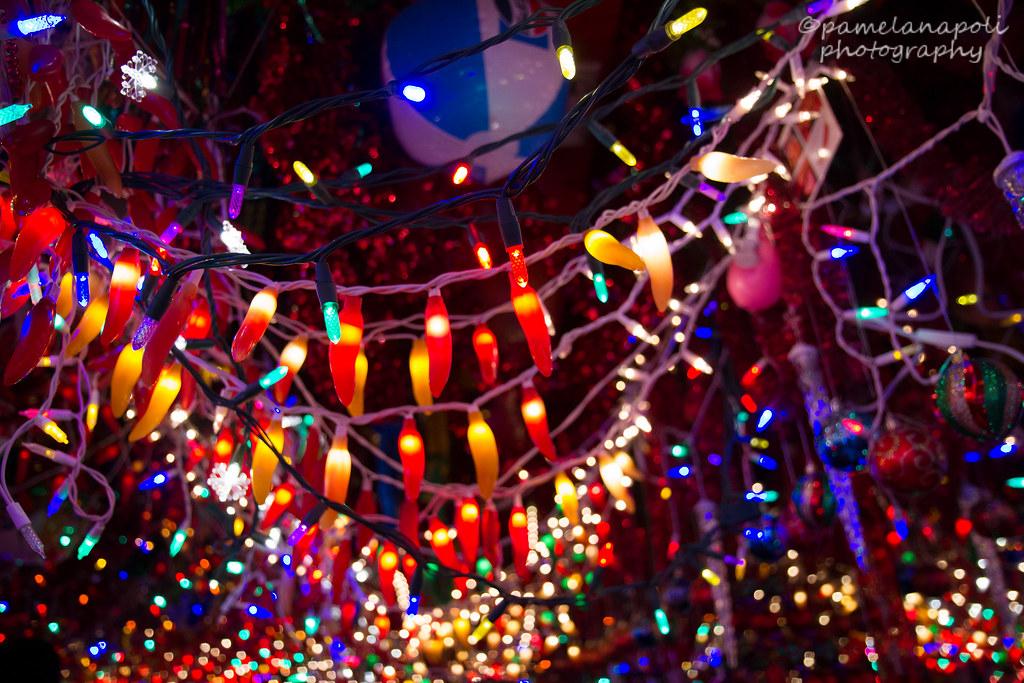 Where Chili Pepper Lights Meet Christmas Tree Lights   Flickr