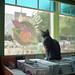 love garden kitteh.