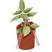 Plant Pot Home