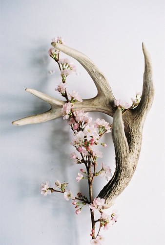 Bone and Blossoms - 1 | by Ashley E. Moore