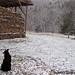 Snow day on the farm 2