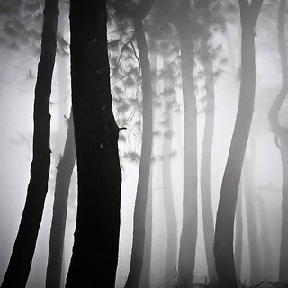 Forest Dance | by Hengki Koentjoro