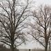 Trees 33506