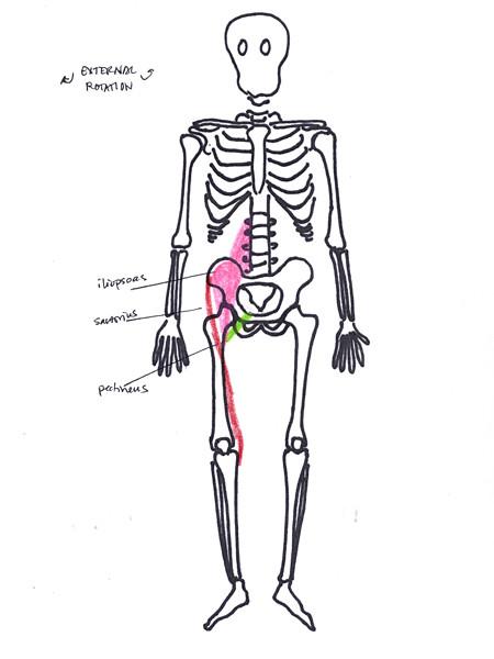 hip external rotation anterior | www.allapoppy.com/2012/02 ...