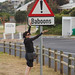 Simon's town baboon warning