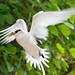 Flying Bird (3)